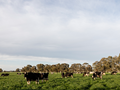 Dairy Australia launches Climate Change Strategy