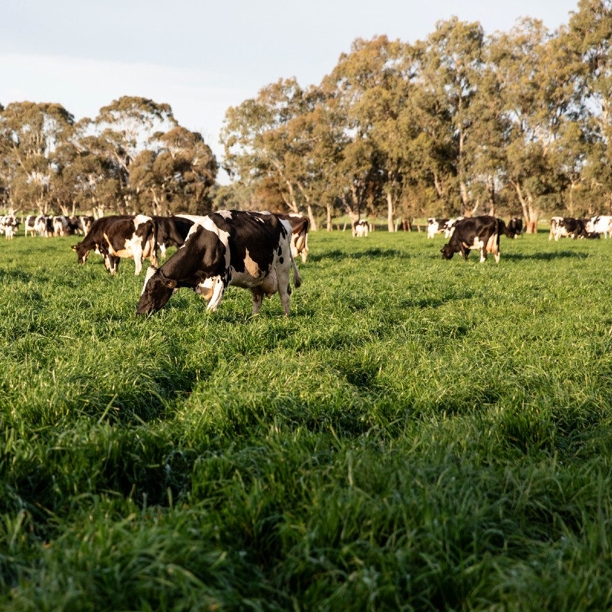 Climate change and dairy