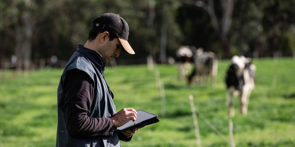 Farmer reading report on tablet