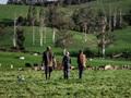 Dairy reform
